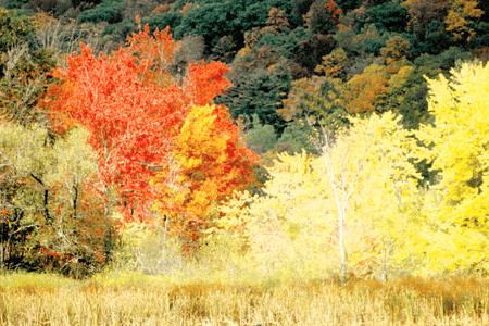 October Mountain State Forest - Massachusetts